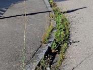 Gemeinderatssitzung: Gehwege und Straßen von Wildwuchs säubern