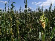Kreis Günzburg: Hagel macht den Bauern zu schaffen