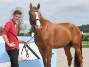 Pferdesport: Unterstützen, treiben oder beruhigen