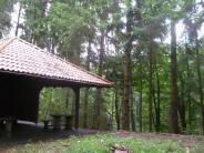 Thannhausen: Womit beschäftigt sich eine Spielgruppe im Wald?