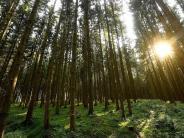 Kreis Günzburg: Was der Wald so alles vor sich hat