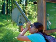 Ursberg: Einen Blick in den Wald werfen