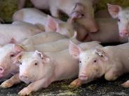 Kreis Günzburg: Welche Tiere dem Amt gemeldet werden müssen