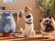 """Kinokritik: Film über geheimes Leben der Haustiere: """"Pets"""" bleibt erzählerisch sehr brav"""