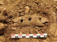Archäologie: Steinzeitfund:Archäologen präsentieren Seilwerkzeug