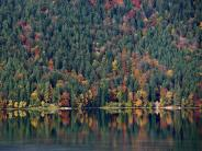 Natur: Wie geht es dem Wald?