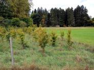 Ökokonto: Mehr Eichen und Tannen in den Wald