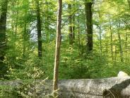 Wald: Nachhaltig wirtschaften und länger leben