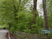 Schondorf: An der Point sollen Eichen stehen bleiben