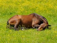 Landsberg: Prozess um Klinikkosten für ein Pferd