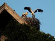 Exkursion: Das große Storchen-ABC