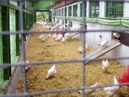 Vogelgrippe H5N8: Vogelgrippe am Ammersee: Was es jetzt zu beachten gibt