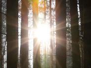 Westerholz: Windkraft: Scheuring ist raus