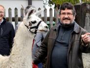 Bilanz: Ein Lama als Zugpferd