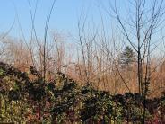Schondorf: Erst Brombeeren, dann Bäume