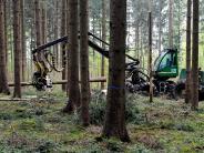 Landkreis: Der Wald soll schnell wieder nachwachsen