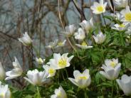 Landkreis Landsberg: Frühlingsblüten mit Solarheizung