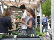 Hoffest in Holzhausen: Die Jungpflanzen waren der Renner