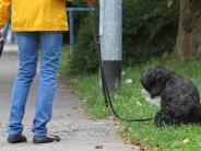 Kinsau: Zu viele Hundekotbeutel landen in der Natur