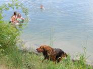 Landsberg: Wenn der Hund mit zum Baden geht