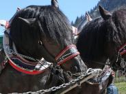 Obermeitingen: Pferde gehen durch: Fünf Kinder werden verletzt