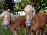 Geretshausen: Pferderipper: Tierschützer setzen Belohnung aus
