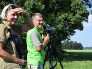 Landkreis Landsberg: Die jungen Brachvögel und ihre Väter sind abgeflogen