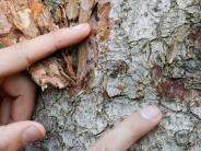Landkreis Landsberg: Die Käfer-Katastrophe geht ins dritte Jahr