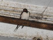 Finning: Die Mückenjäger sind größtenteils schon im Süden