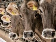 Landsberg: Das große Geschäft mit der Milch