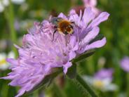 Landsberg: Wie man Wildbienen Gutes tun kann