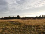 Landsberg: Wie aus einem Militärübungsplatz ein Naturerbe wird
