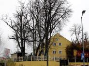"""Landsberg: Was versteht man unter dem Begriff """"Baumbestand""""?"""