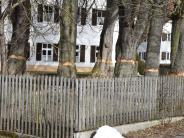 Dettenschwang: Der Gasthof Stangl ist Geschichte, die Bäume sind es auch bald