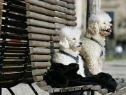 Tiere: Stadthund aussuchen: Nicht jede Rasse ist geeignet