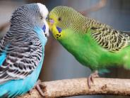Tiere: Käfigboden für Vögel mit Hindernissen ausstatten