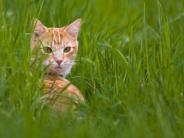 Tiere: Freigängerkatzen werden oft doppelt betreut