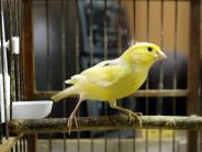 Tiere: Vögel während Urlaub in gewohnter Umgebung lassen