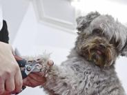 Tiere: Pflege für Bello: Im Hundesalon auf Hygiene achten