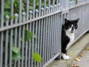 Tiere: Freigängerkatzen mit Pfiff anlocken