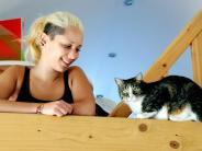 Tiere: Lieb und teuer: Katzen sind Umsatzbringer
