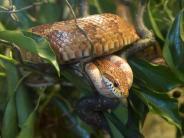 Tiere: Schlangen bringen ein Stück Wildnis ins Haus