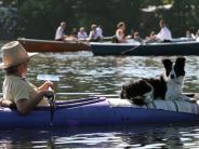 Tiere: Bootstour mit Bello: Hund ans Schaukeln gewöhnen