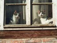 Tiere: Mit älteren Katzen einmal jährlich zum Arzt gehen