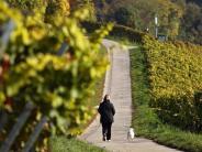 Tiere: Vergiftungsgefahr: Weintrauben für Hunde tabu
