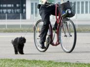 Tiere: Radeln mit Hund: Vierbeiner sollte Tempo vorgeben