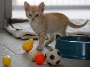 Tiere: Grundausstattung fürs Katzenbaby kaufen