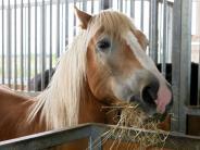 Tiere: Nagel im Pferdehuf vom Tierarzt entfernen lassen
