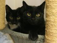 Tiere: Mehrere Katzen gleichzeitig zum Tierarzt bringen