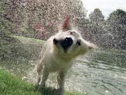 Tiere: Nasser Hund: Platz machen lassen und weggehen